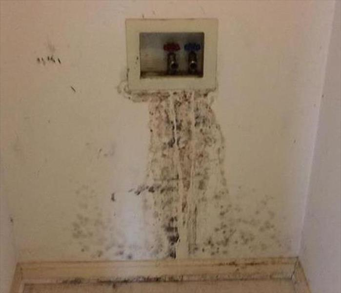 East Phoenix Laundry Room Mold Problem Before