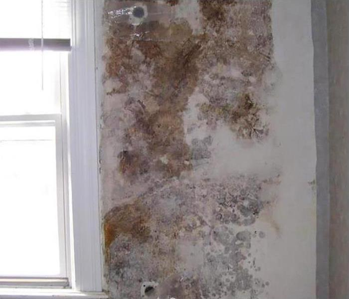 Mold Remediation In Central City Phoenix