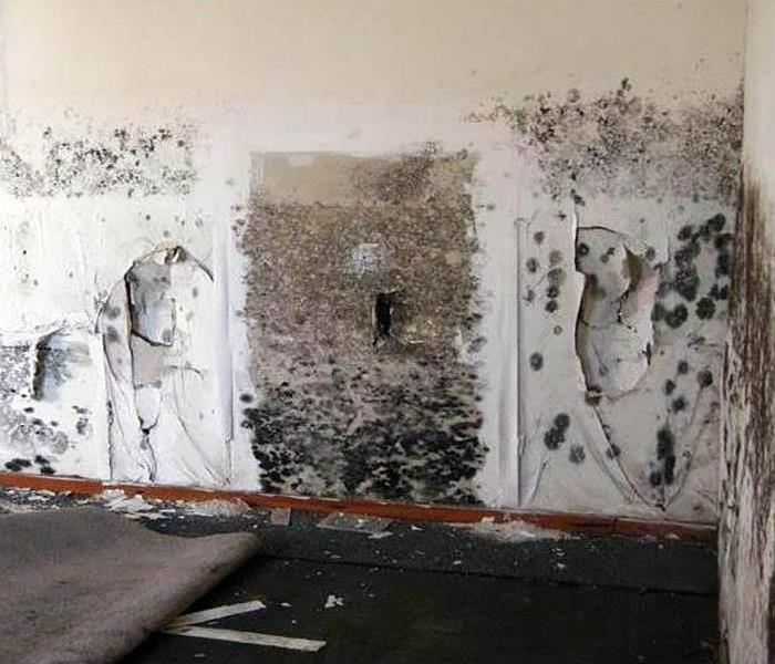 Mold Damage Remediation In East Phoenix