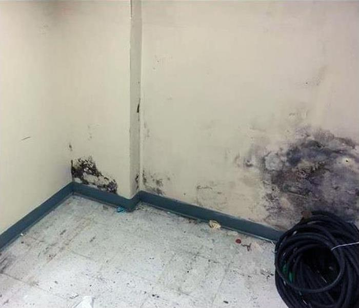 Commercial Mold Remediation In Arcadia
