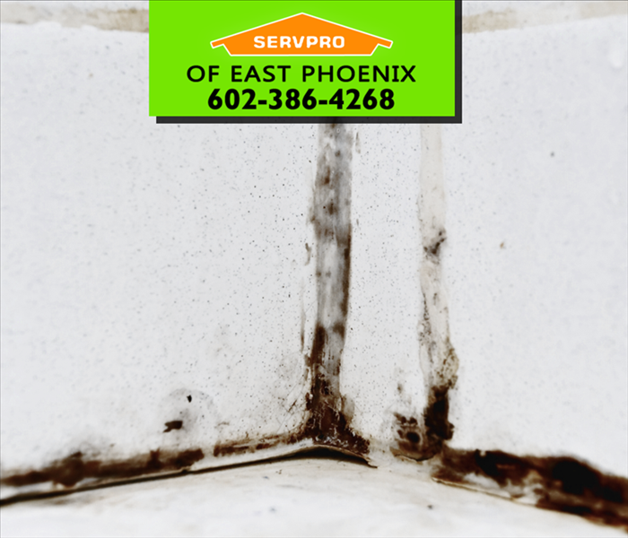 Mold Remediation Does Black Mold Have to be Removed Professionally?