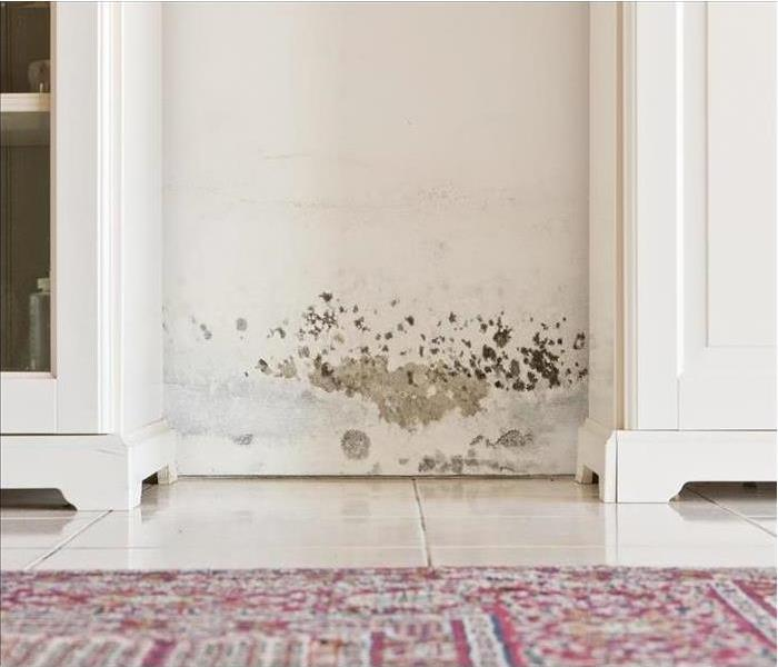 Mold Remediation Access To Mold Damage Mitigation Services That Help You Maintain Your Phoenix Area Home Properly